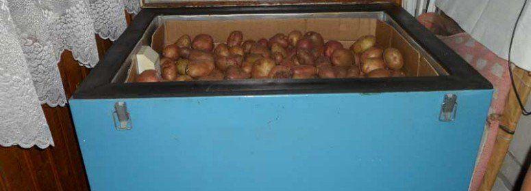 картошка на балконе