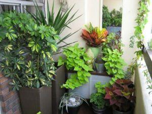 растения зимой