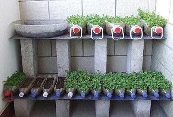 Выращиваем огурцы на балконе в пластиковых бутылках