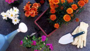 цветы удобрения