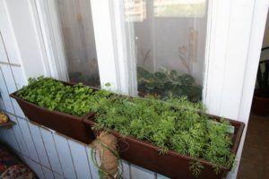 зелень свежая